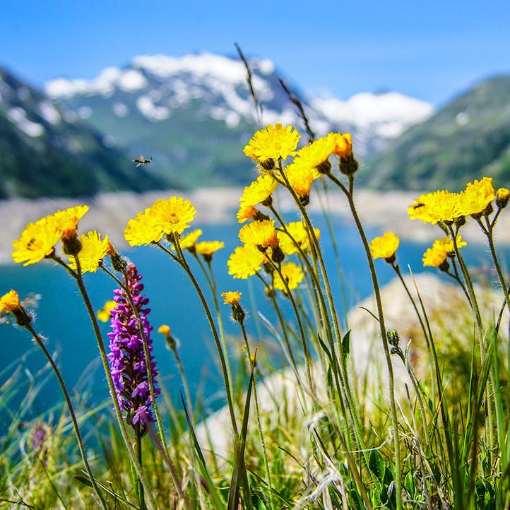 vacances Alpes